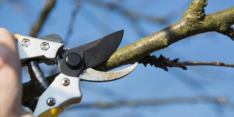 The Importance of Tree Pruning Services